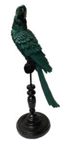location décoration perroquet